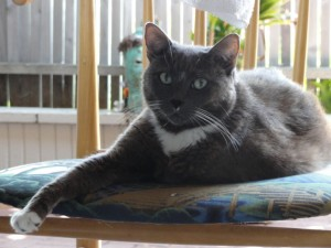 Toshi - my cat